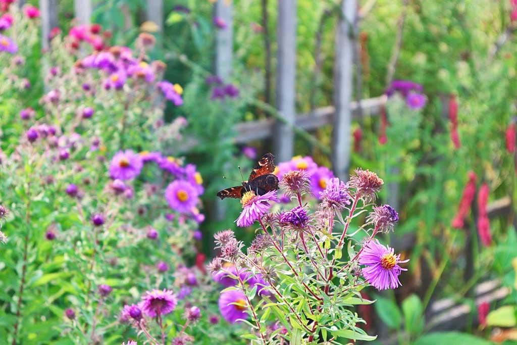 Schmetterling im Britzer Garten