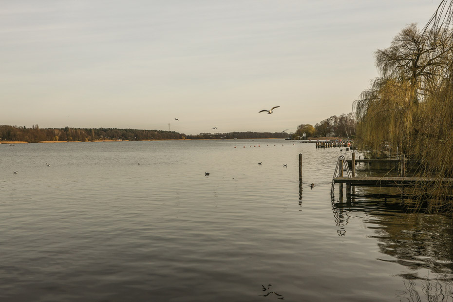 Natur pur am Ruppiner See