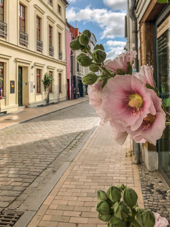 Schwerin Sehenswürdigkeit: Blume in der Schweriner Altstadt