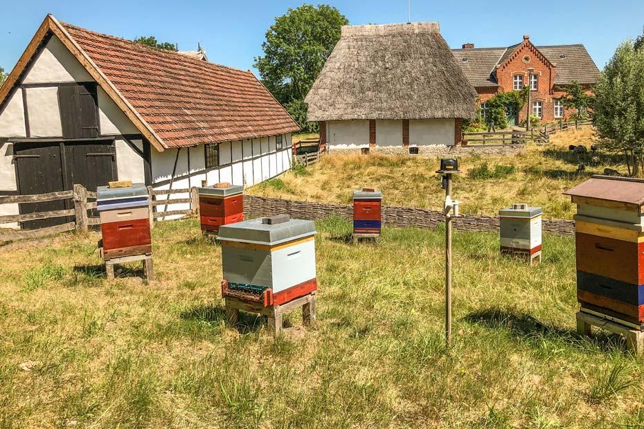 Sehenswürdigkeiten Schwerin: Bienen im Freilichtmuseum Muess
