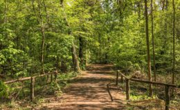 Rückblick 2020 im Grünauer Wald
